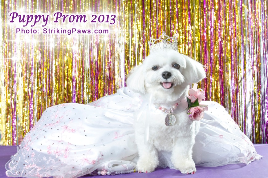 Bella Mia at the Puppy Prom - Photo by Sophie Gamand