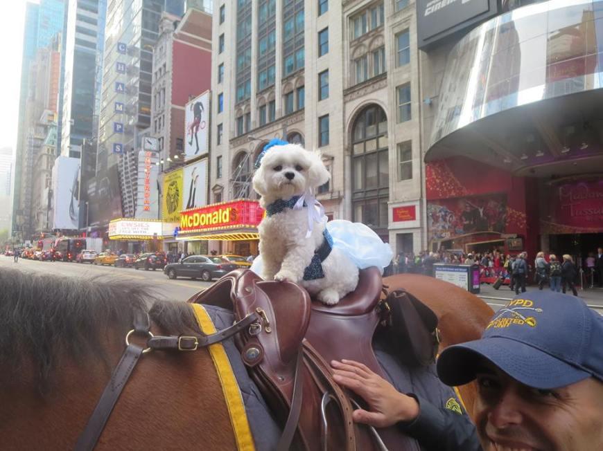 Bella Mia Twerks in Times Square