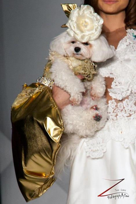 Anthony Rubio Fashion Week Brooklyn 2014 Pet Fashion Show 13