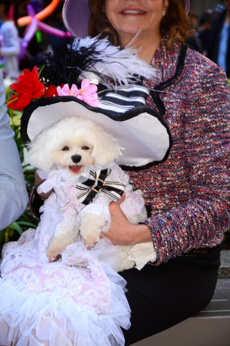 Anthony Rubio Deigns Pet Fashion New York Easter Parade 2014 5th Ave Bella Mia DSC_2339new